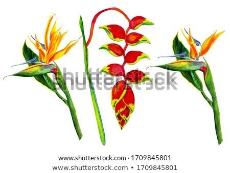 orange heliconia flower stock photo © jkraft5