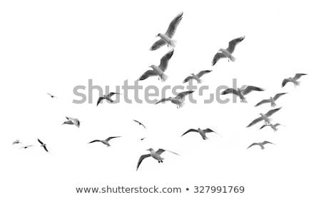 vuelo · gaviotas · aves · dibujo · boceto · vector - foto stock © loopall