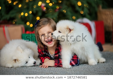 赤ちゃん 白 ふわっとした 子犬 子供 犬 ストックフォト © ElenaBatkova