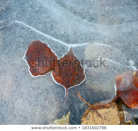 kar · damla · çiçek · kış · zaman · çiçekler - stok fotoğraf © lunamarina