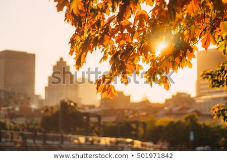 autumn in city park at october Stock photo © Paha_L