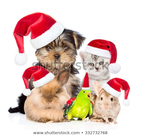 large group of christmas pets with santa hats stock photo © feedough