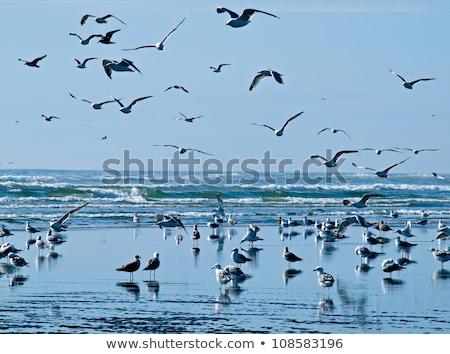 Variedad cielo naturaleza azul arena vida Foto stock © Frankljr