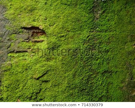 Geel mos foto voorjaar natuur Stockfoto © Nneirda
