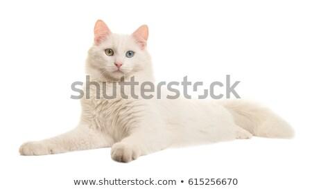 Türk kamyonet kedi örnek gözler yeşil Stok fotoğraf © Dazdraperma