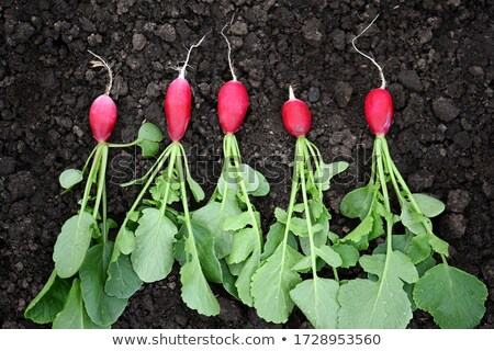 öt retek organikus csetepaté tavasz étel Stock fotó © Hofmeester