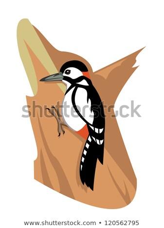 Woodpecker Pecking Tree Drawing  Stock photo © patrimonio