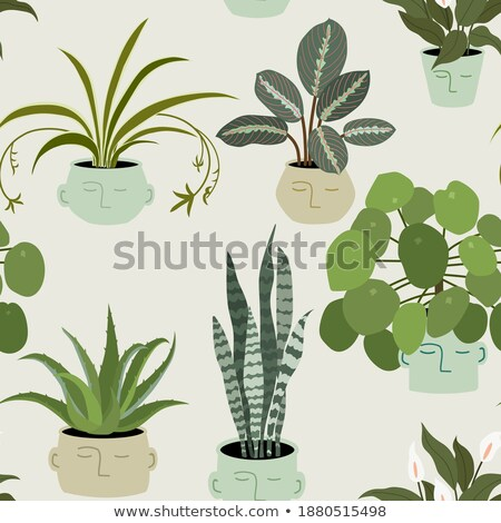 Flowers in Pots, Houseplants Seamless Pattern Stock photo © robuart