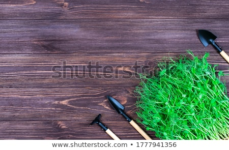 Micro greens sprouts of peas Stock photo © olira