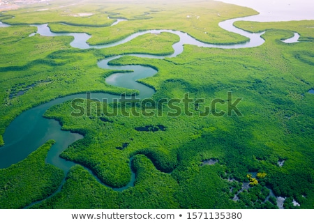 természetes · mocsár · Thaiföld · tájkép · háttér · fák - stock fotó © witthaya