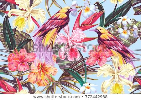 Stock fotó: Szövet · virágok · tapéta · textúra · felület · minta