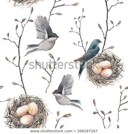 Kézzel rajzolt vízfesték művészet madárfészek tojások húsvét Stock fotó © Natalia_1947