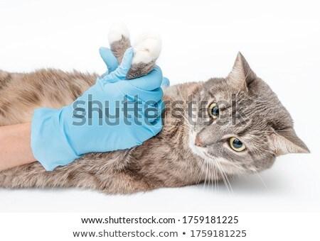 vétérinaire · chat · clinique · fille · santé - photo stock © HASLOO
