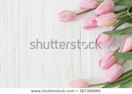 Tulipes blanche table en bois fleur fleurs printemps Photo stock © phila54