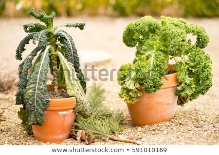 verde · top · view · fresche · rustico - foto d'archivio © klinker