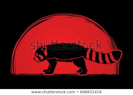 Zangado desenho animado vermelho panda ilustração corrida Foto stock © cthoman