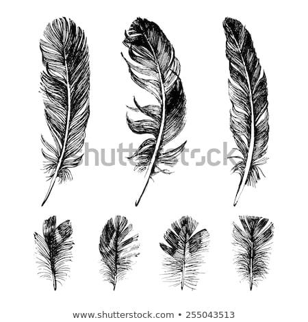 装飾的な 鳥 羽毛 ヴィンテージ ベクトル ストックフォト © pikepicture