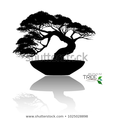 Japanese bonsai  tree  silhouette Stock photo © mayboro