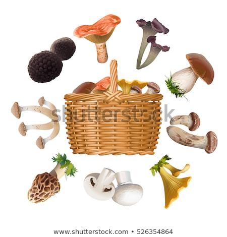 バスケット 異なる 食用 キノコ 木材 自然 ストックフォト © dolgachov