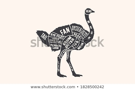 Ostrich. Butcher guide scheme Stock photo © FoxysGraphic