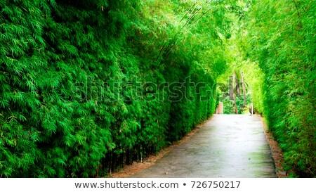 Vegetação túnel verão verde planta hera Foto stock © FOKA