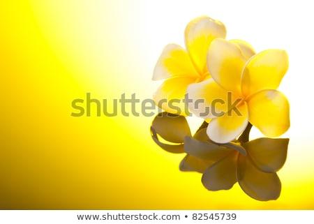 two yellow leelawadee flowers under sunshine stock photo © ansonstock