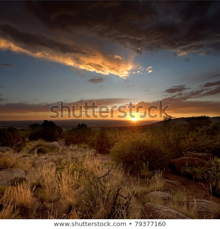 Desert Sunset in Albuquerque, New Mexico stock photo © mtilghma