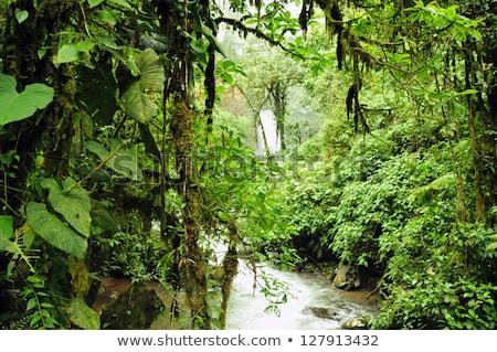 vízesés · kicsi · sűrű · trópusi · esőerdő · természet - stock fotó © mtilghma