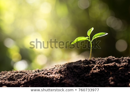 Seedling green plant on soil stock photo © Sarunyu_foto