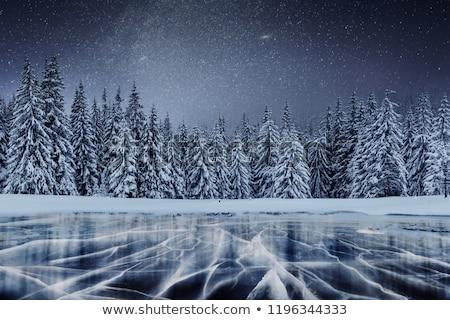 Night snowfall Stock photo © Anna_Om