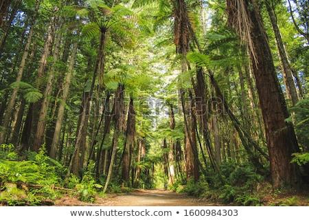 erdő · kilátás · Új-Zéland · fák · felső - stock fotó © emiddelkoop