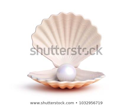 Gyöngy kagyló tengerpart víz tenger óceán Stock fotó © ozaiachin