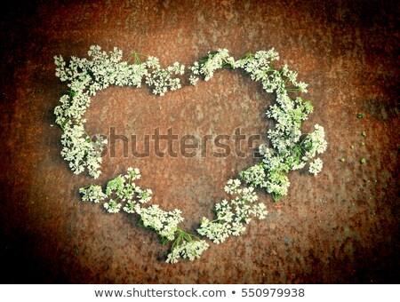 marco · verde · flores · estrellas · primavera - foto stock © marinini