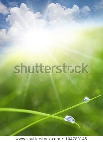 eco nature background with grass sun and blue sky reflections i stock photo © taiga