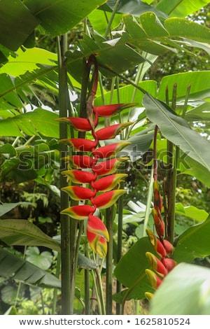 Ponta flor tropical flor planta tropical Foto stock © ildi