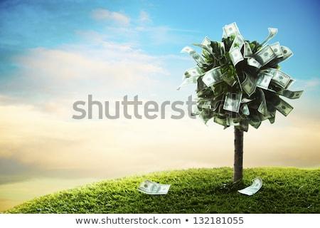 ストックフォト: 金のなる木 · 男 · 水まき · ドル · ツリー · 白人