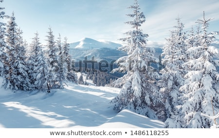 Stockfoto: Winter · ochtend · pine · zonlicht · sneeuw · zonsondergang