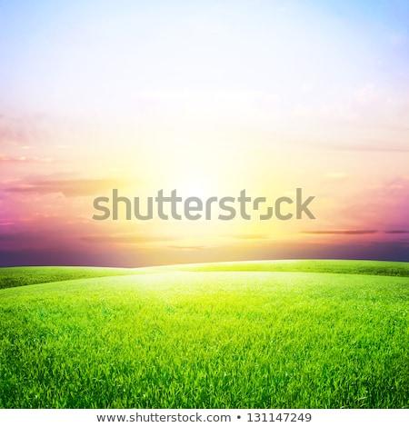 Farmland And A Beautiful Sky Stock photo © saddako2