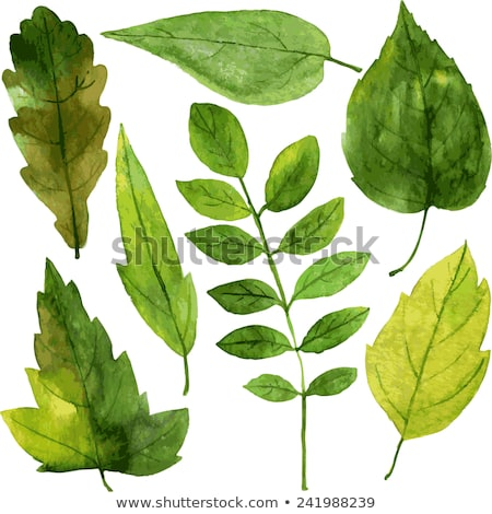yeşil · kül · yaprak · beyaz - stok fotoğraf © boroda
