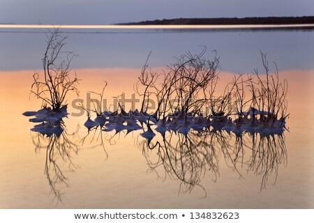 Bush dode zee shot zout zout Stockfoto © eldadcarin