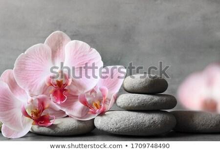 preto · massagem · pedras · isolado · rocha - foto stock © justinb