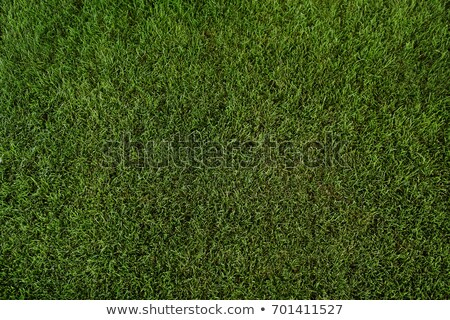 Stock photo: Green lawn background