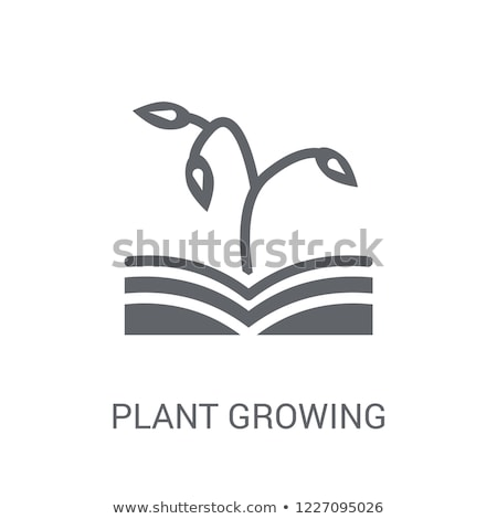Plant sapling growing from book Stock photo © zzve
