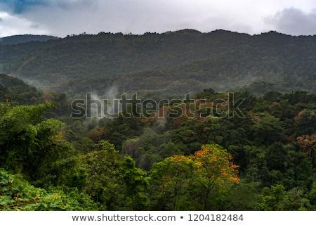 settentrionale · costa · Caraibi · albero · panorama · mare - foto d'archivio © phbcz