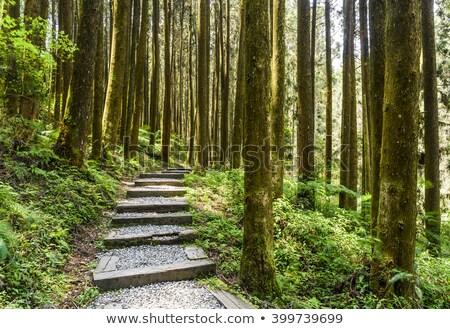 Erdő ösvény lépcsősor kopott fa út Stock fotó © elwynn