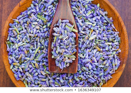 Lavande bourgeon soft accent feuillage jardin Photo stock © russwitherington