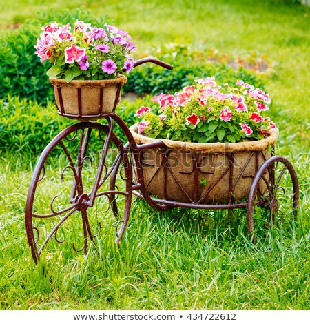 Dekoracyjny rower ogród model starych koszyka Zdjęcia stock © ryhor