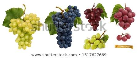 köteg · szőlő · szár · levelek · étel · piros - stock fotó © angusgrafico