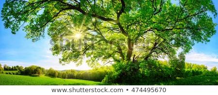 elképesztő · napfelkelte · tájkép · fa · fű · virágok - stock fotó © wad
