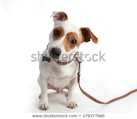 çok güzel köpek yavrusu yürüyüş beyaz sevimli siyah Stok fotoğraf © dnsphotography